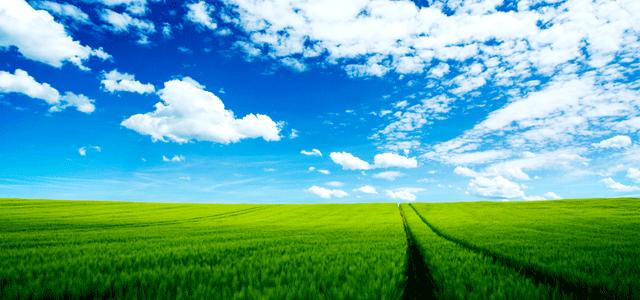 Un prato verde e le speranze cetraro in rete for Prato verde