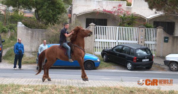 Equiraduno Cetraro (12)