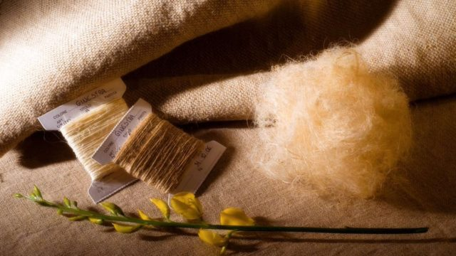 La ricerca sulle fibre di ginestra: i risultati presentati oggi pomeriggio a Cetraro