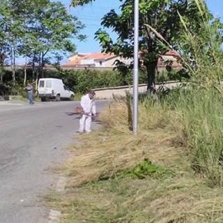 """Cesareo: """"…sfalcio dell'erba su tutto il territorio…"""""""
