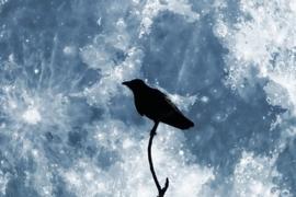 La notte del corvo: IV edizione. 8 agosto 2017, ore 21.00