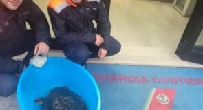 Cetraro, salvata tartaruga Caretta caretta