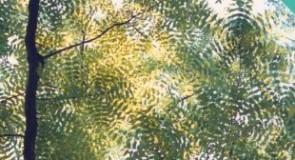 Il barone rampante. Sugli alberi per guardare bene la terra